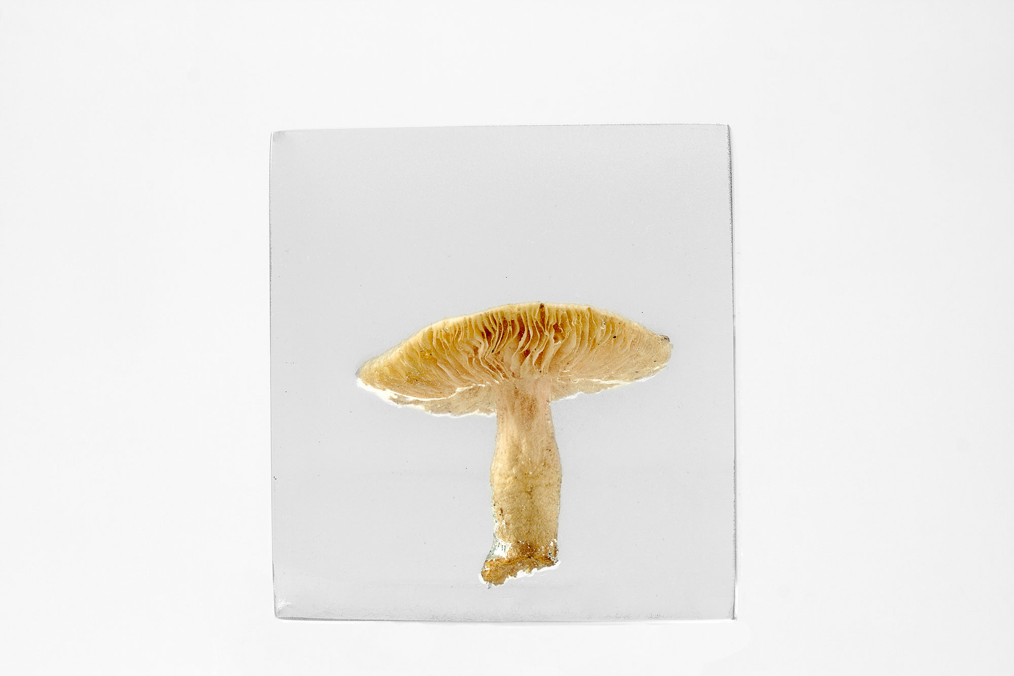 Art, The Flowery Dream: Specimen 11, 2010
