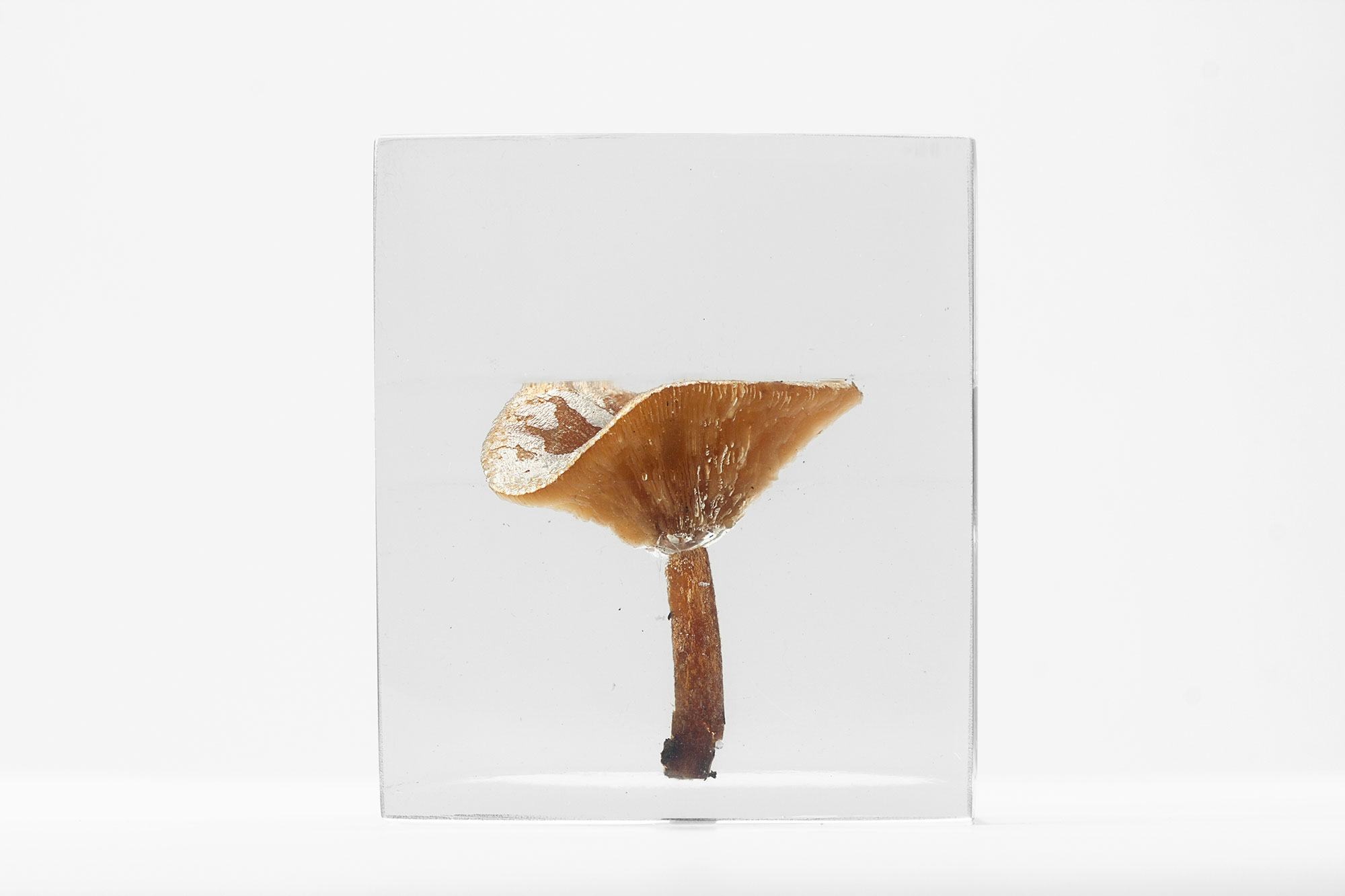 Art, The Flowery Dream: Specimen 13, 2010